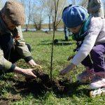 Деревья — в память о подвигах. Посадим вместе «Лес Победы»!