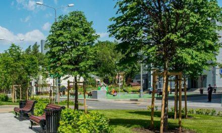 «Больше деревьев, меньше заразы в городе». Эксперт об озеленении столицы